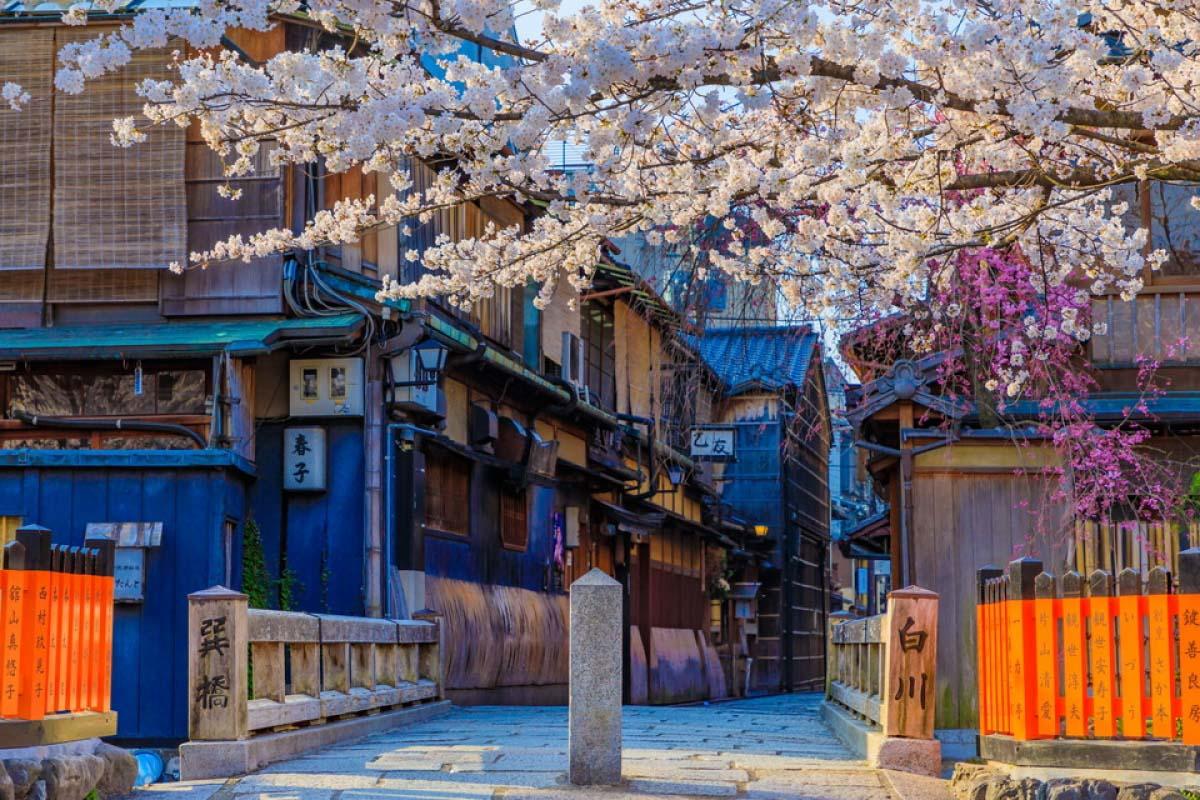 祇園白川櫻