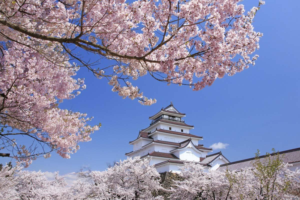 「會津若松城 櫻花」的圖片搜尋結果