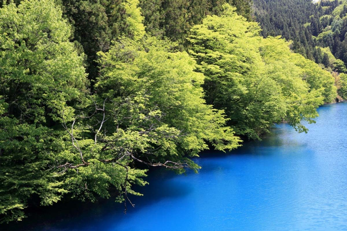 Hồ Shima