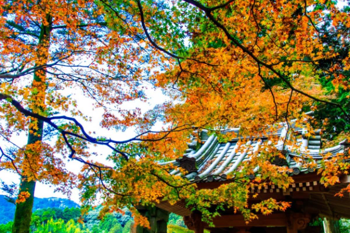 Kuil Daikozenji