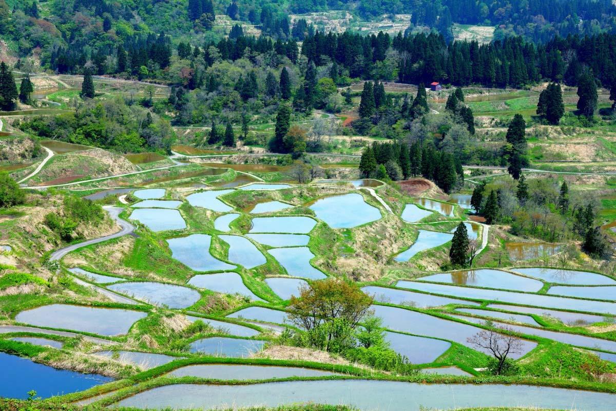 Hoshitoge no Tanada (Rice Terrace)