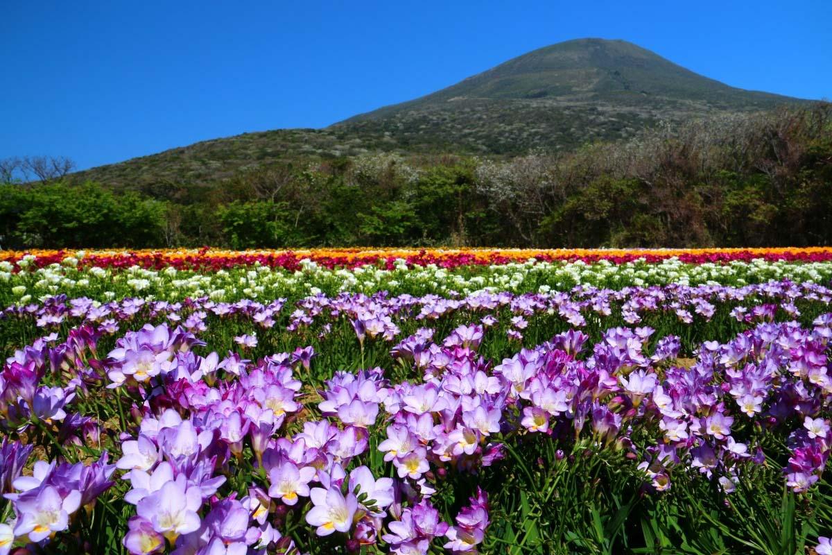 Đảo núi lửa Hachijojima