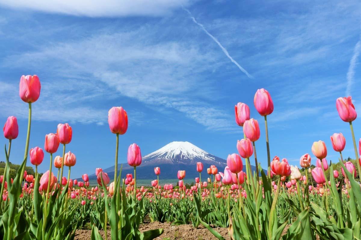 Kết quả hình ảnh cho Công viên hoa Yamanakako