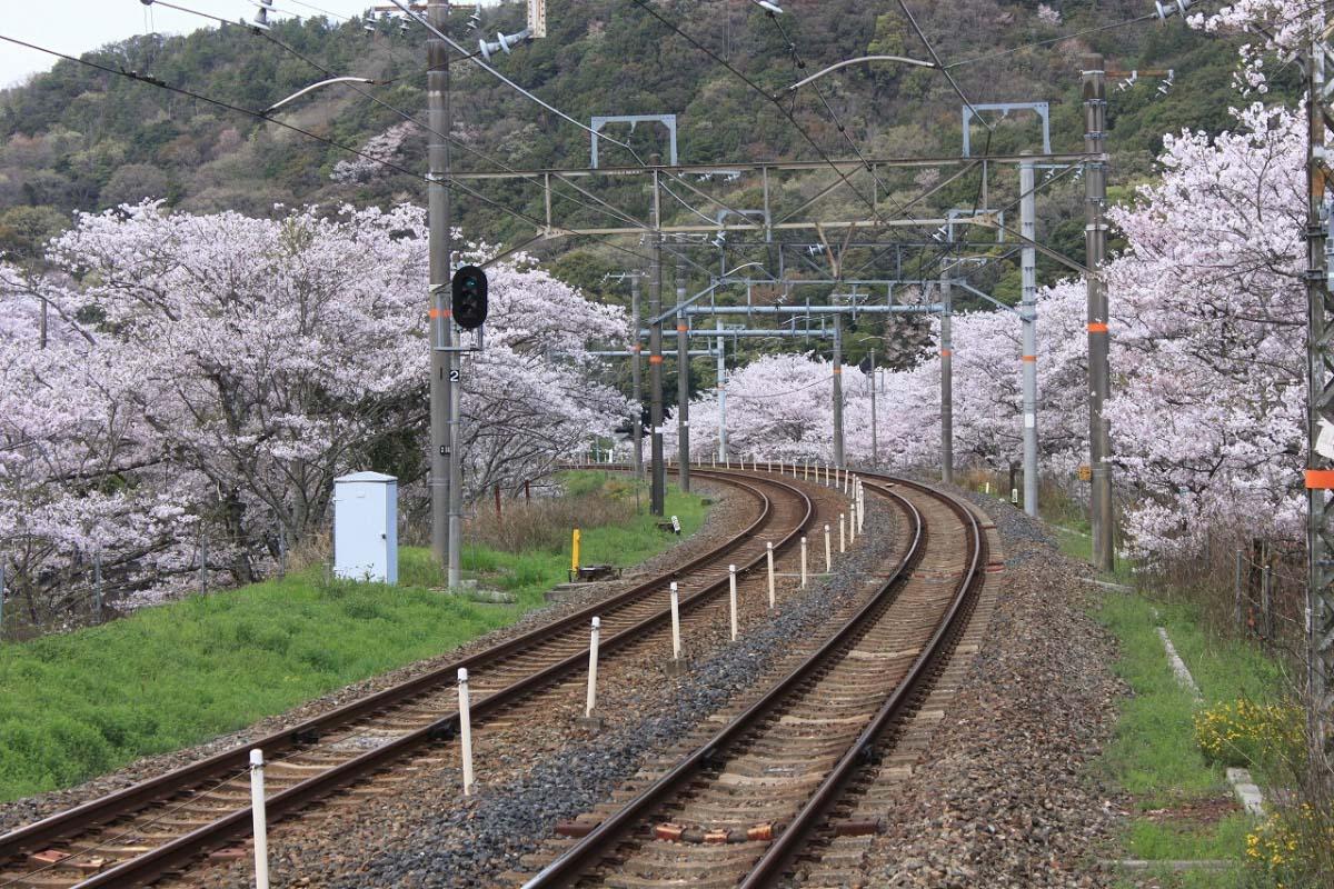 Yamanaka Valley
