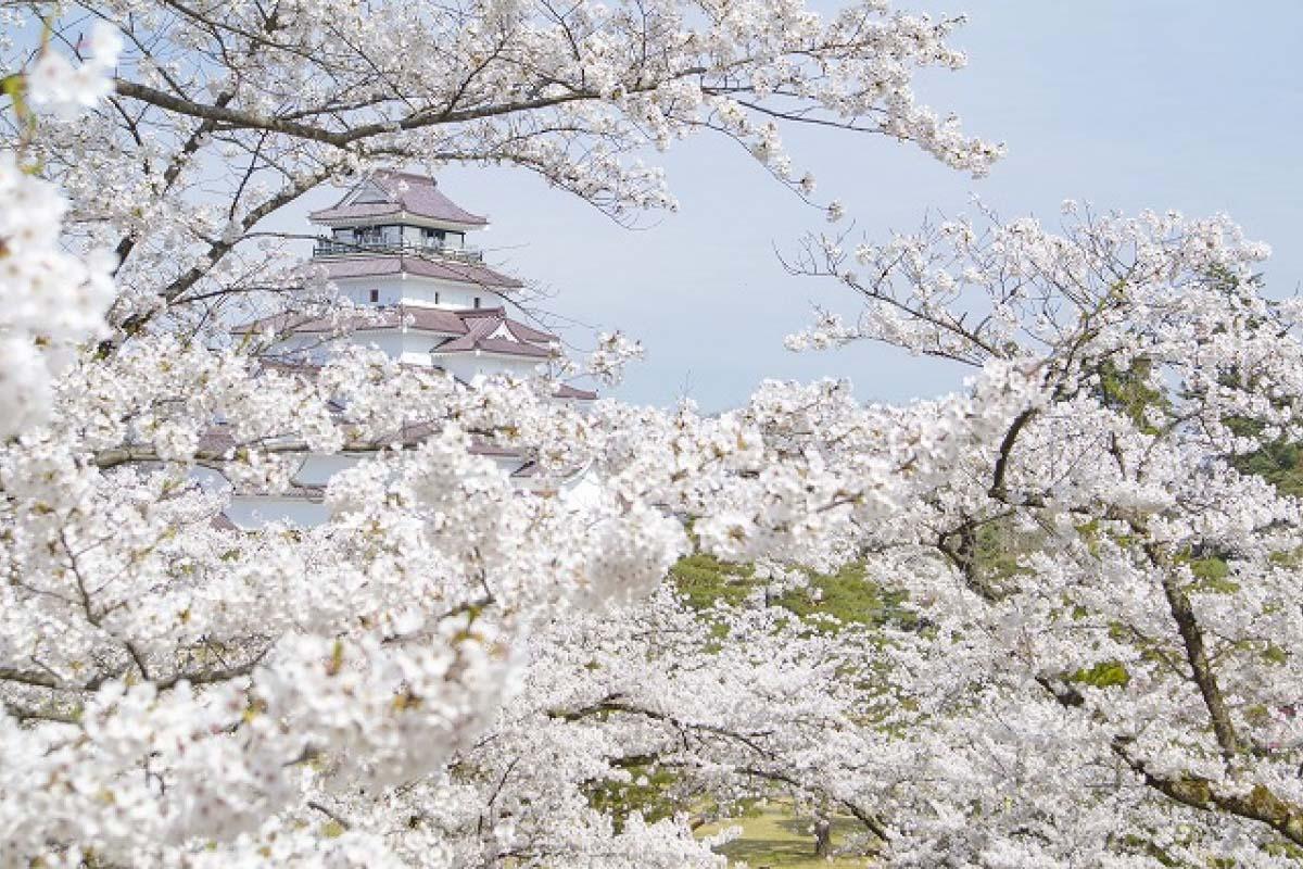 Thành Aizu Wakamatsu (Thành Tsuruga)