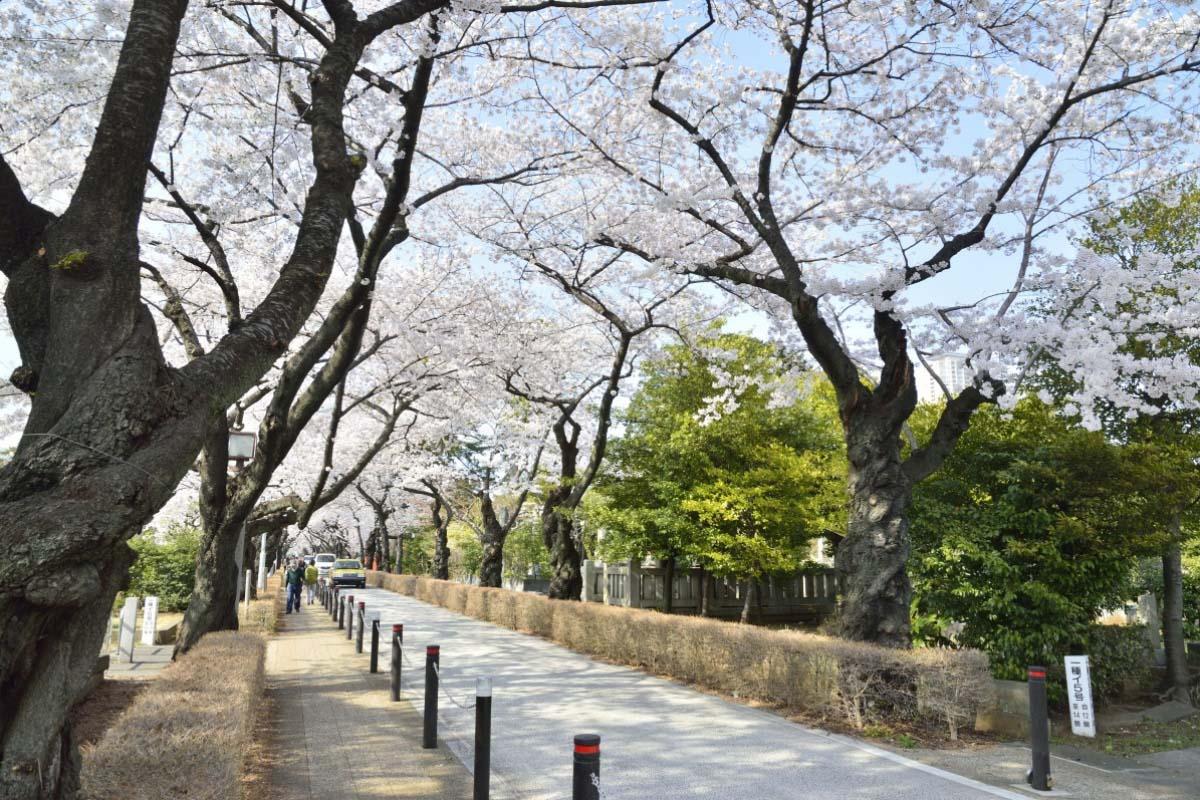 Nghĩa trang Aoyama