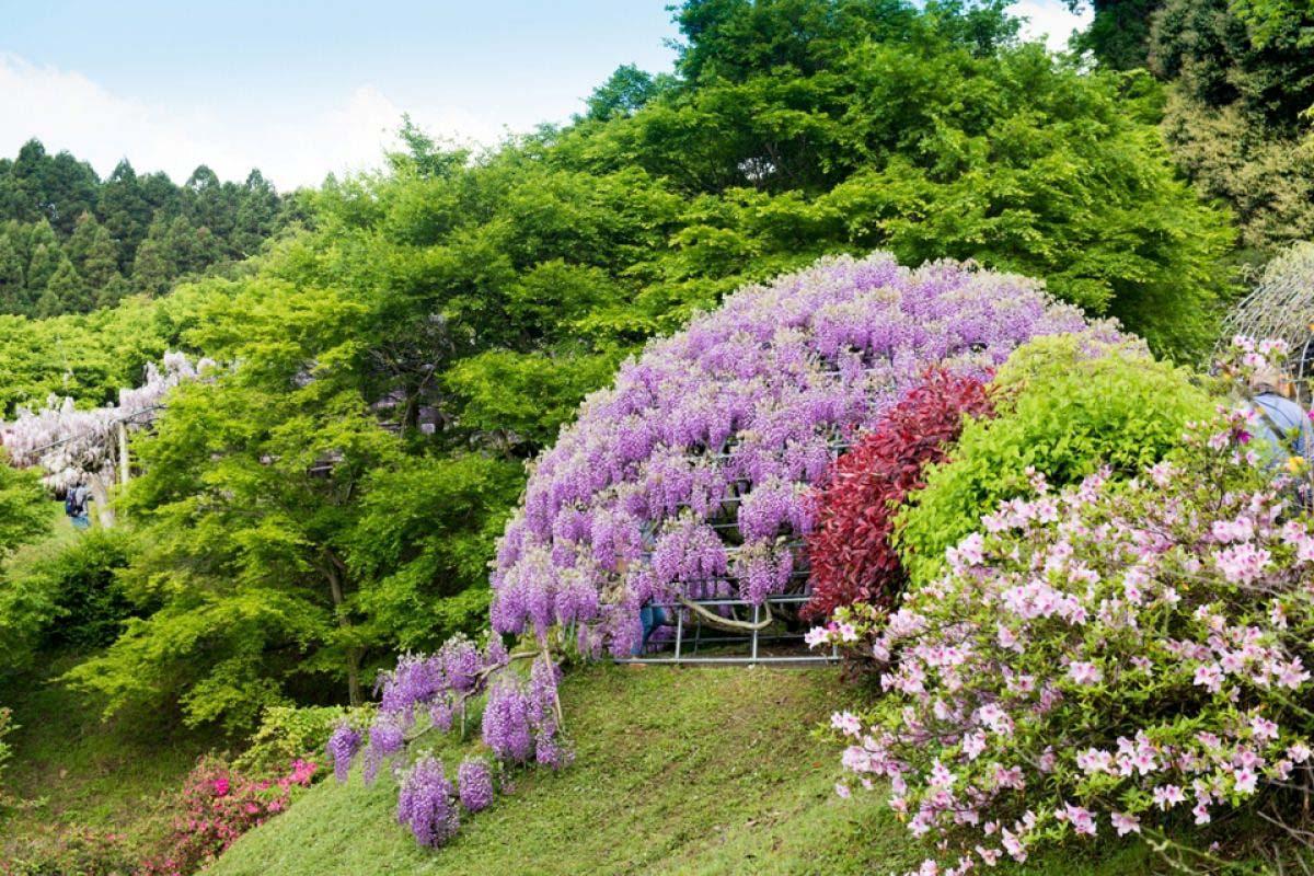 Công viên Kawachi Fuji