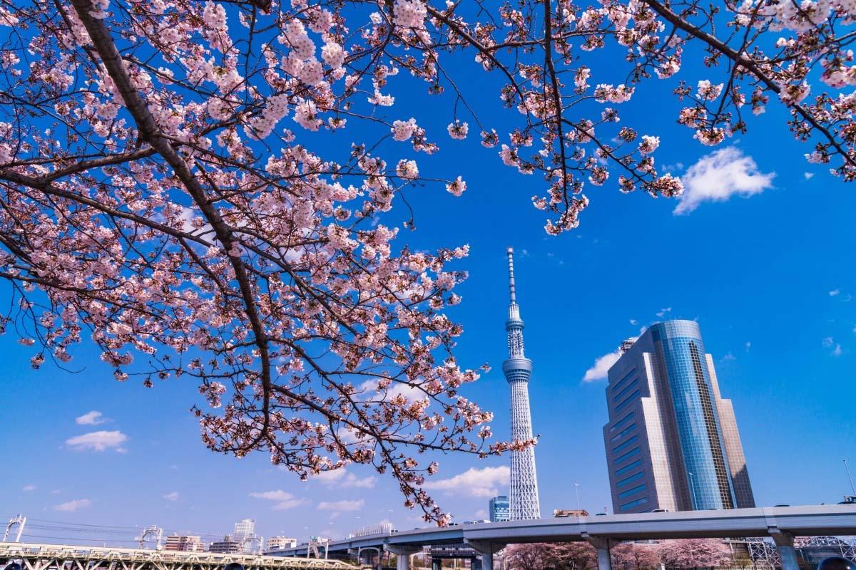 東京スカイツリーの絶景 Zekkei Japan