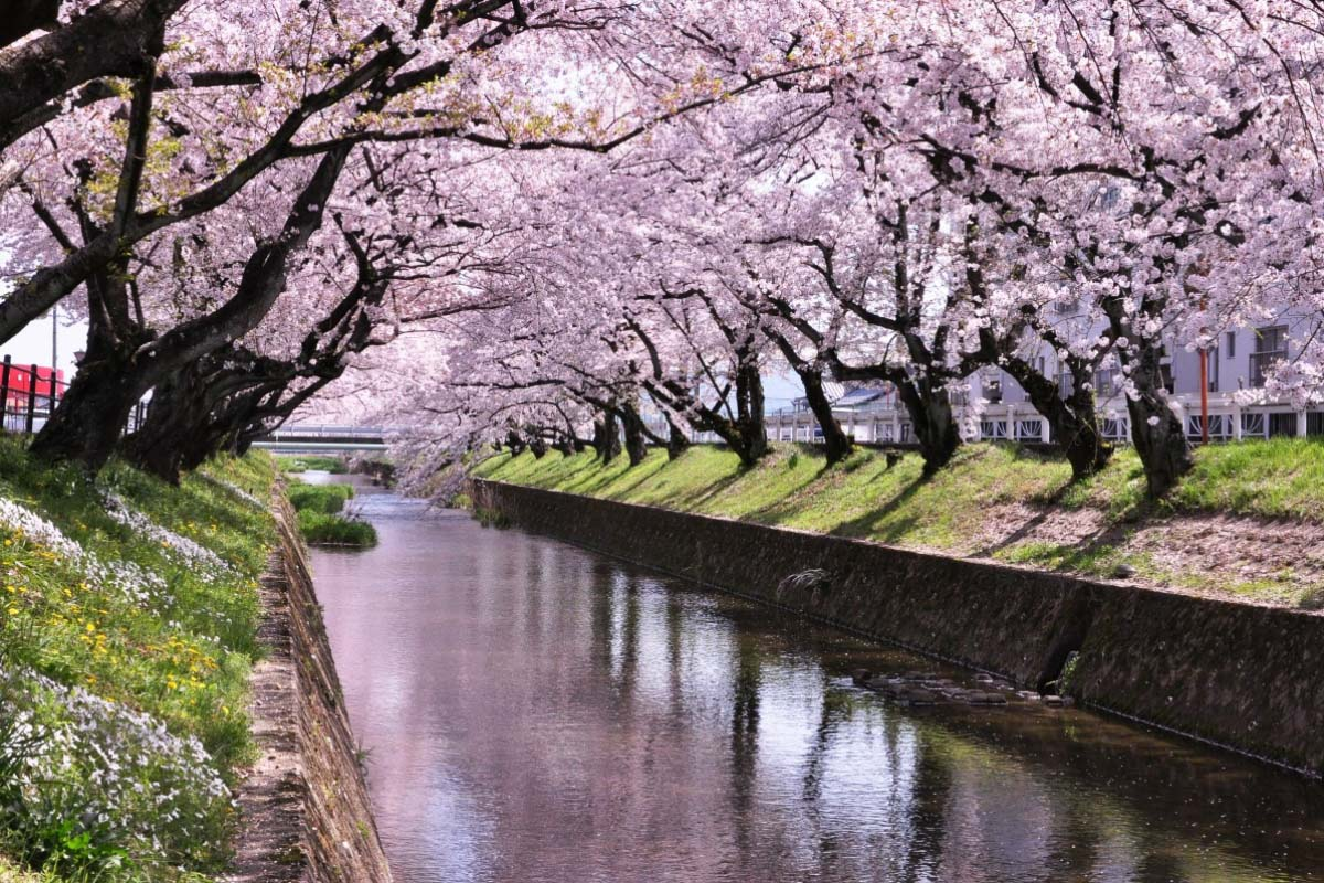 Gojo River