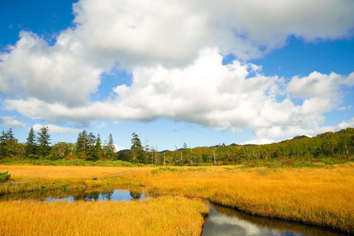 ニセコ 神仙 沼 ニセコ山系の神々が住む!?静寂と自然に包まれた「神仙沼」へ!