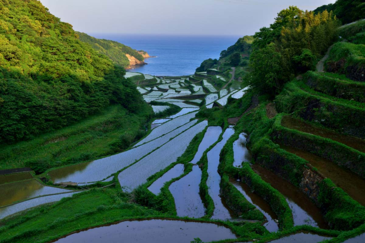 Hamanoura Rice Terraces