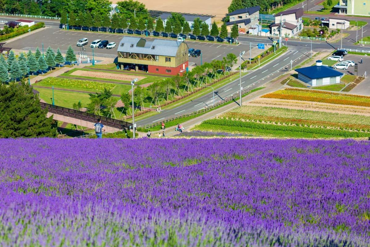 Choei Lavender Farm in Nakafurano