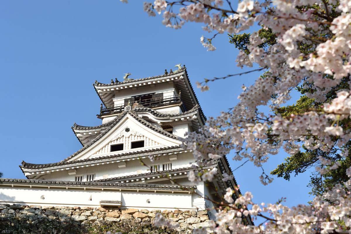 Image result for kochi castle