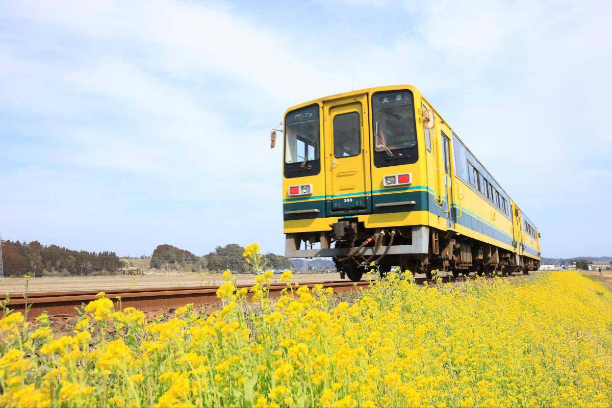 いすみ鉄道 菜の花列車