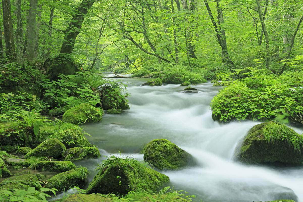 「奧入瀨溪流 春」的圖片搜尋結果