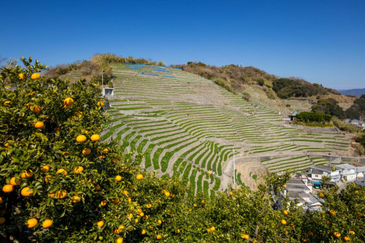 Yusumizugaura Terrace Field