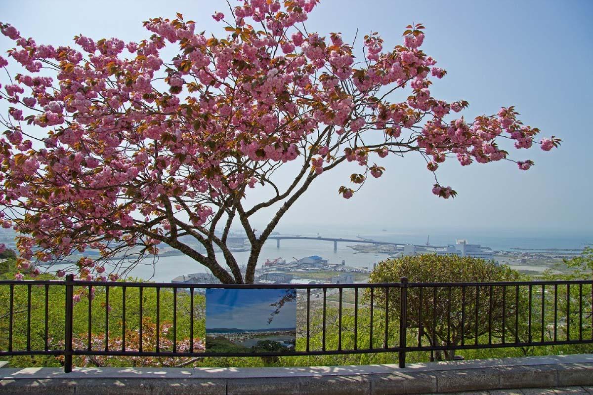 Công viên Hiyoriyama