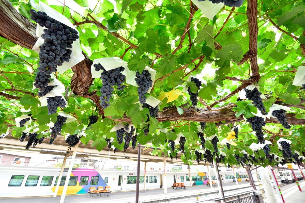 桔梗原葡萄酒庄园