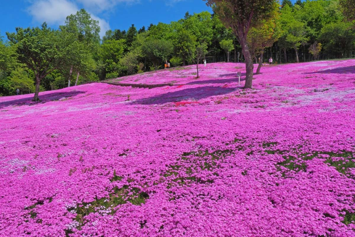 Công viên Takinoue