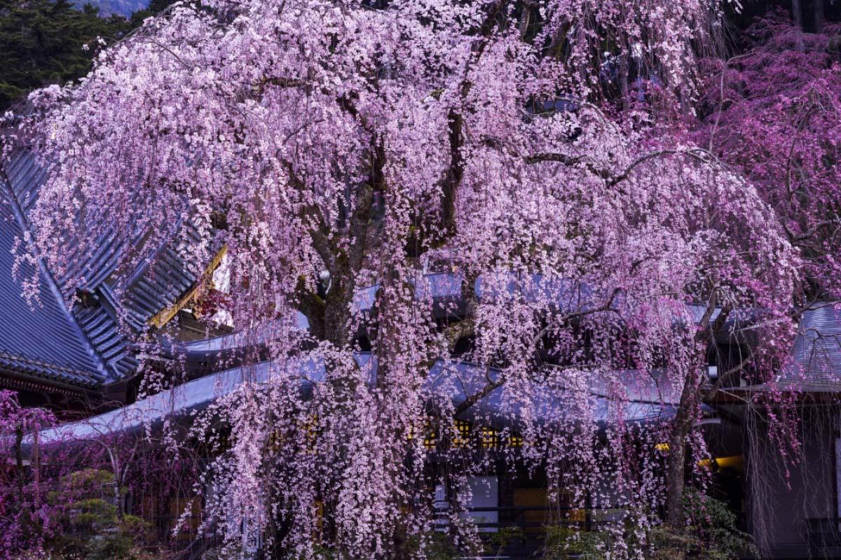 Kuon-ji Temple (Minobu-san)