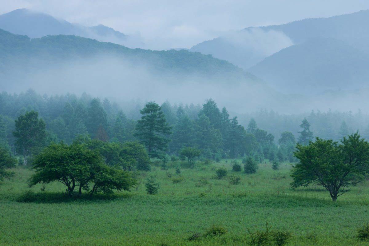 小田代平原