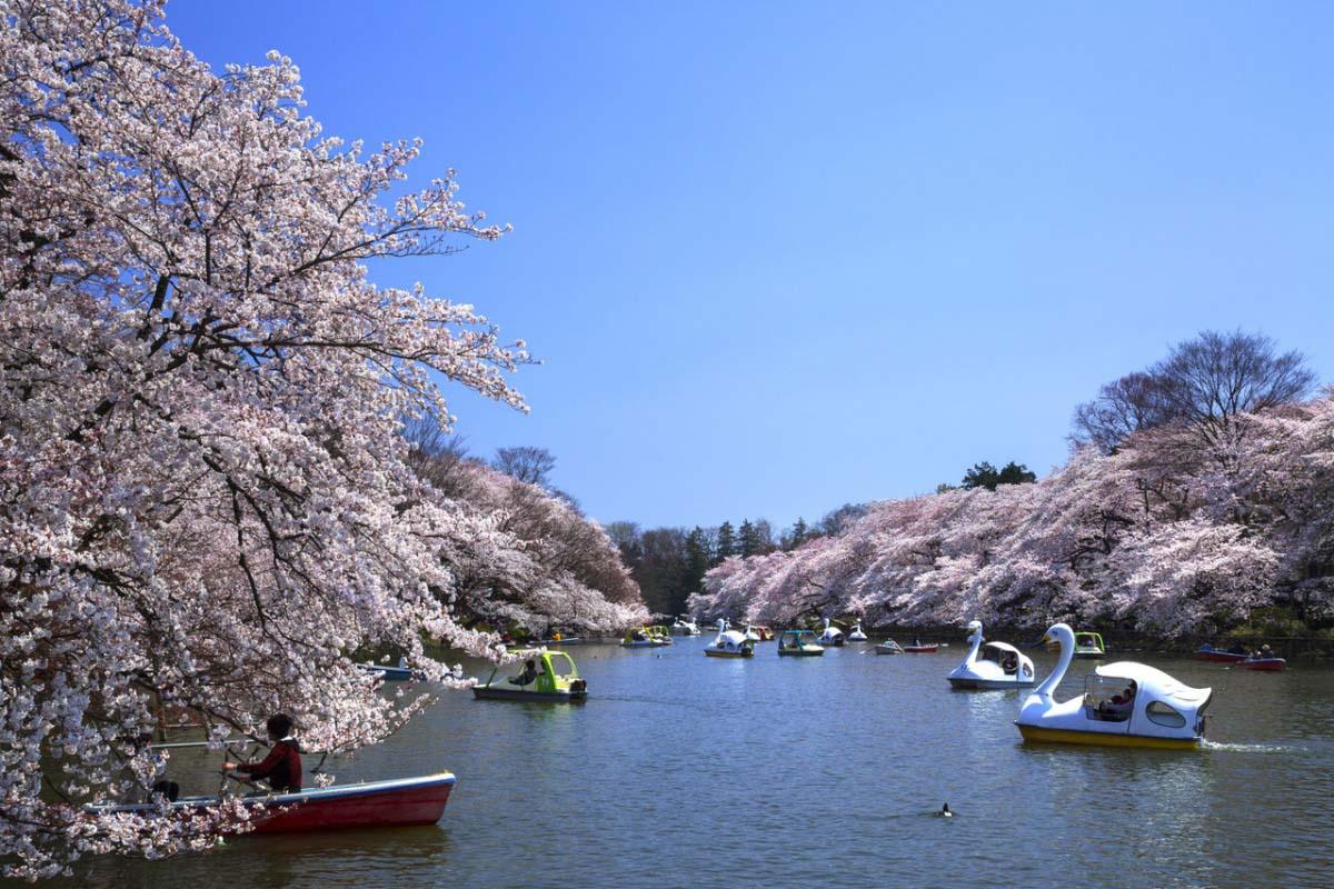 井の頭恩賜公園の絶景|ZEKKEI Japan