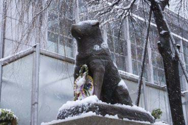 Statue of Hachiko, the Faithful Dog