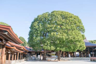 明治神宫(东京)