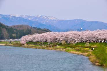 檜木內川櫻花道(秋田)