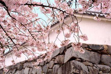 Fukuoka Castle Ruins(Fukuoka & Hakata)