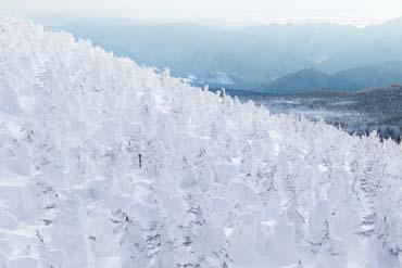 Zao juhyo forest(rime on trees)(Yamagata)