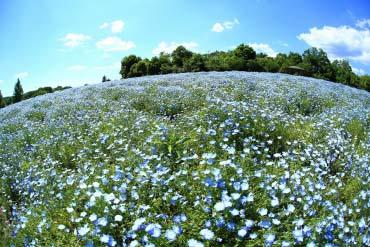 Công viên quốc gia đồi Bihokukyoryo