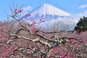 岩本山公園