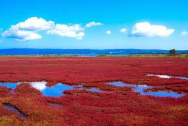 能取湖(北海道的其他景区)