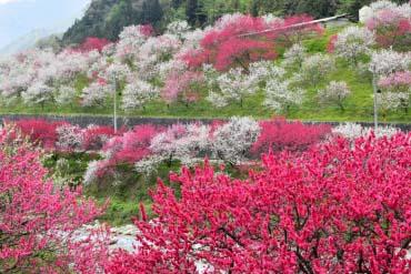 Hanamomo Kaido Road