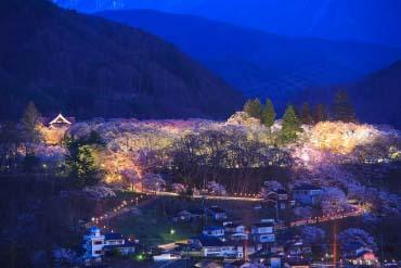 高遠城址公園の桜(長野)