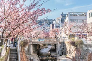 熱海櫻糸川櫻花祭