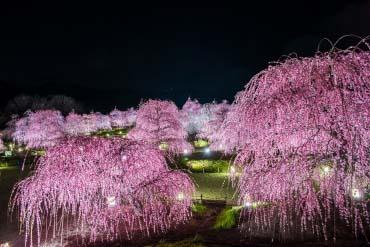 Suzuka Forest Garden(Mie)