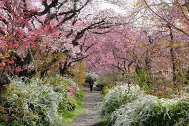 原谷苑(京都)