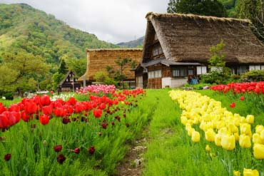 The Historic Village of Gokayama(Toyama)