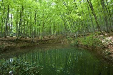 Beauty forest(Niigata)