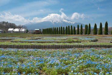 Hana-no-Miyako Park (Mt. Fuji)
