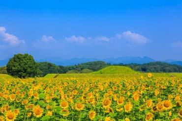 Saitobaru Burial Mounds(Miyazaki)