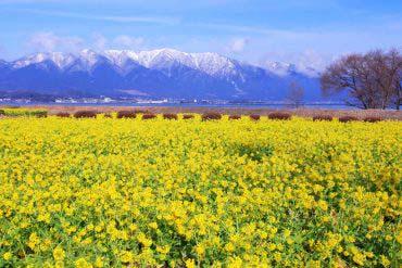 第一渚公園(滋賀・琵琶湖)