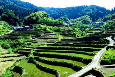 Ini Rice Terraces