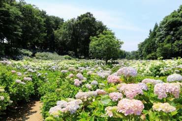 Ogikubo Park (Michi-no-eki