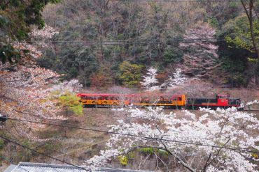 Sagano Scenic Railway(Kyoto)