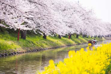 八幡堀(滋贺、琵琶湖)