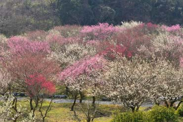 员辩市农业公园(三重)