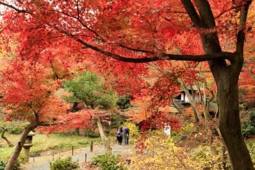 Kebun Sankei-en (Yokohama)